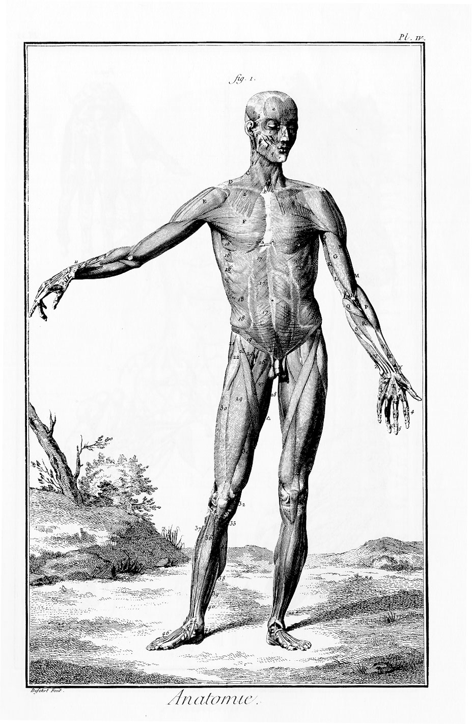 encyclopedie anatomie