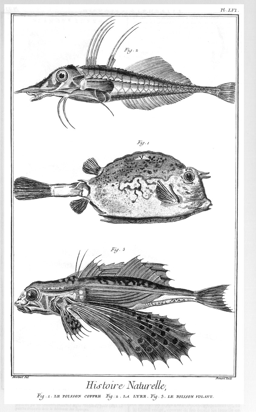 encyclopedie poisson